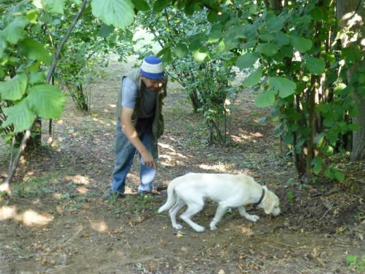 truffelzoeker met hond