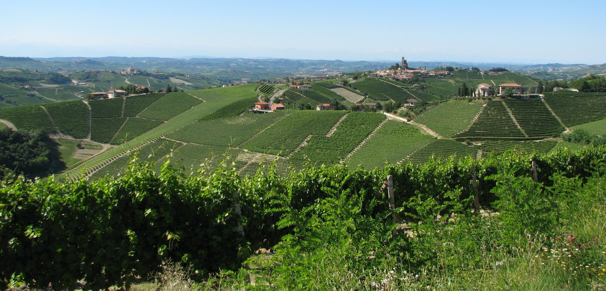 zomerwijnlandschap met kasteel Serralunga