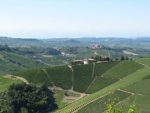 wijnlandschap bij Perno