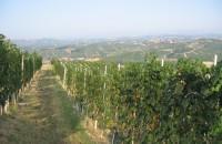 wijnranken met uitzicht