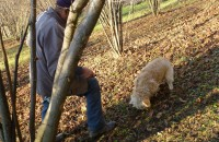 truffel zoeken in de herfst