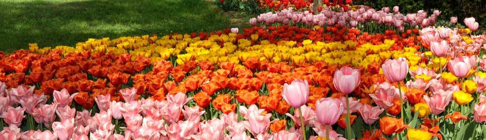 Messer Tulipano di Pralormo
