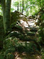 Piedicavallo wandeling bos