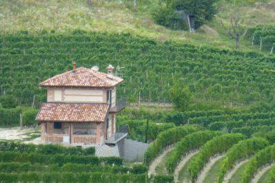 wijnranken Barolo
