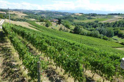 wijnranken Dogliani