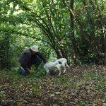 truffelzoeker met zijn twee honden